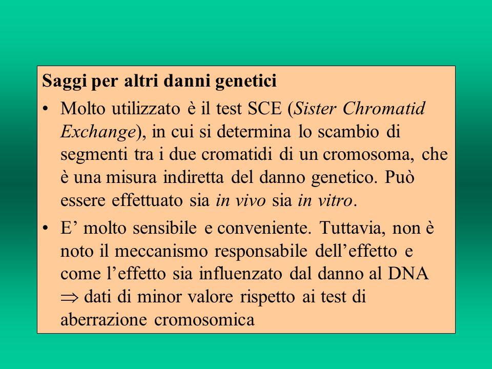 Saggi per altri danni genetici Molto utilizzato è il test SCE (Sister Chromatid Exchange), in cui si determina lo scambio di segmenti tra i due cromat