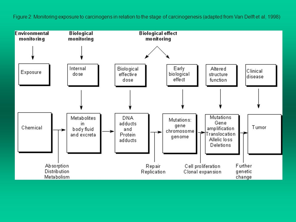 Figure 2: Monitoring exposure to carcinogens in relation to the stage of carcinogenesis (adapted from Van Delft et al, 1998)
