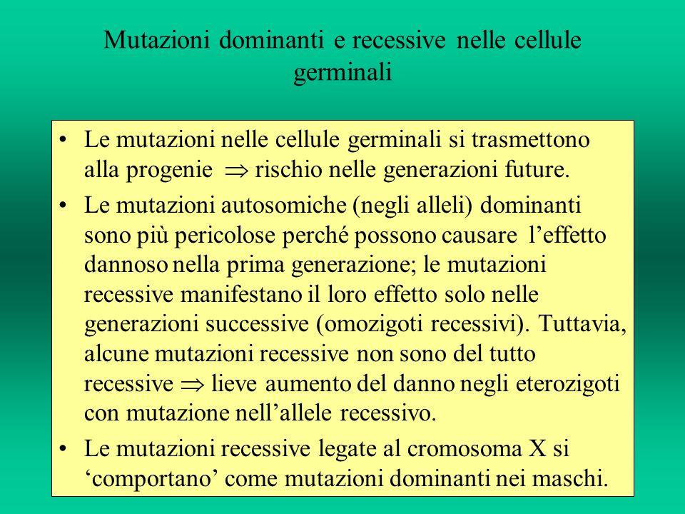 Mutazioni dominanti e recessive nelle cellule germinali Le mutazioni nelle cellule germinali si trasmettono alla progenie rischio nelle generazioni fu
