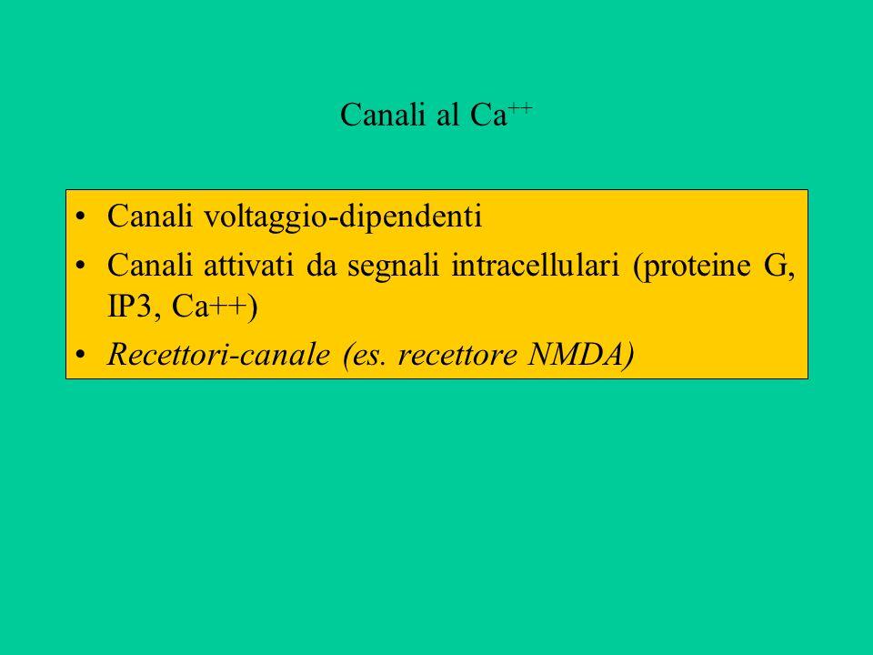 Canali al Ca ++ Canali voltaggio-dipendenti Canali attivati da segnali intracellulari (proteine G, IP3, Ca++) Recettori-canale (es. recettore NMDA)