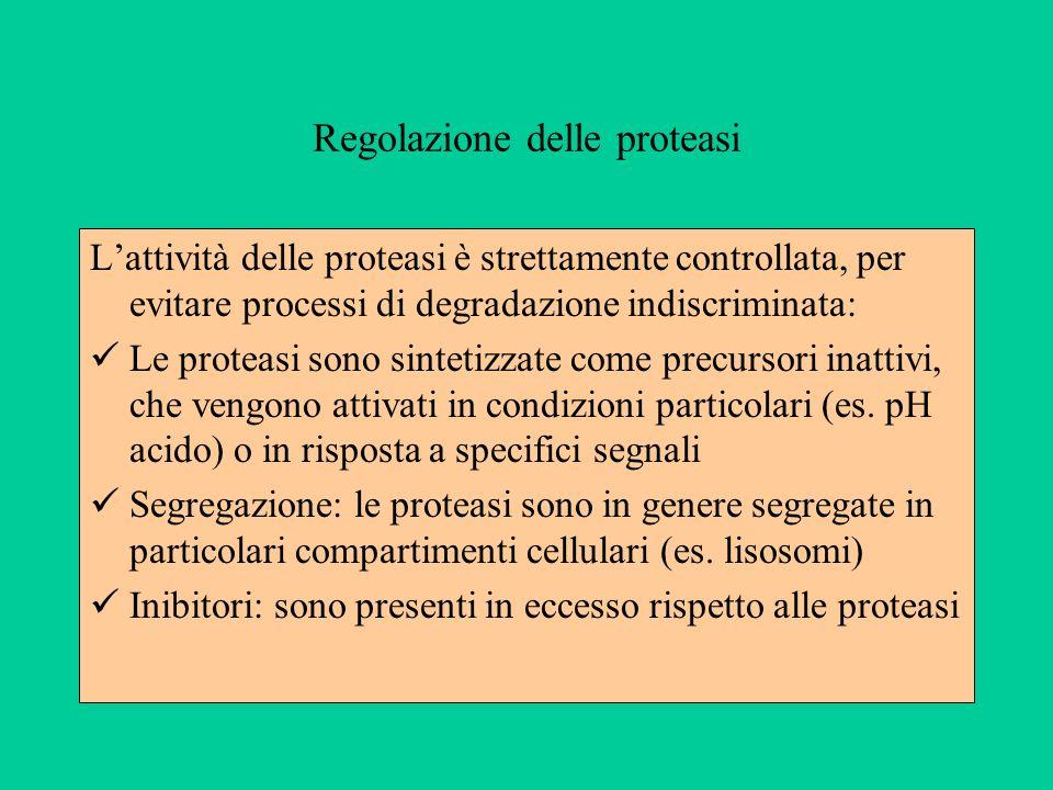 Regolazione delle proteasi Lattività delle proteasi è strettamente controllata, per evitare processi di degradazione indiscriminata: Le proteasi sono