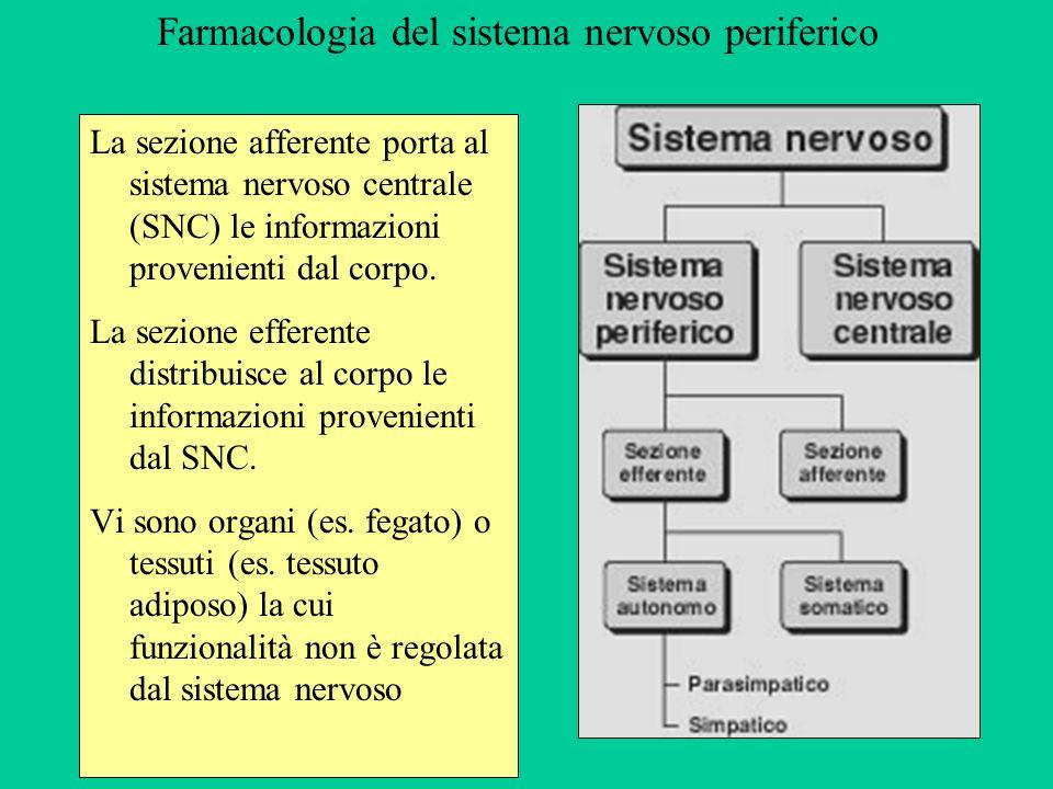 Farmacologia del sistema nervoso periferico La sezione afferente porta al sistema nervoso centrale (SNC) le informazioni provenienti dal corpo. La sez