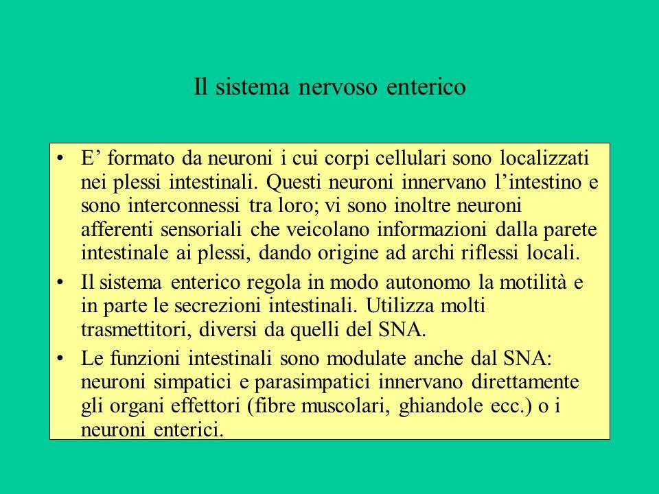 Il sistema nervoso enterico E formato da neuroni i cui corpi cellulari sono localizzati nei plessi intestinali. Questi neuroni innervano lintestino e