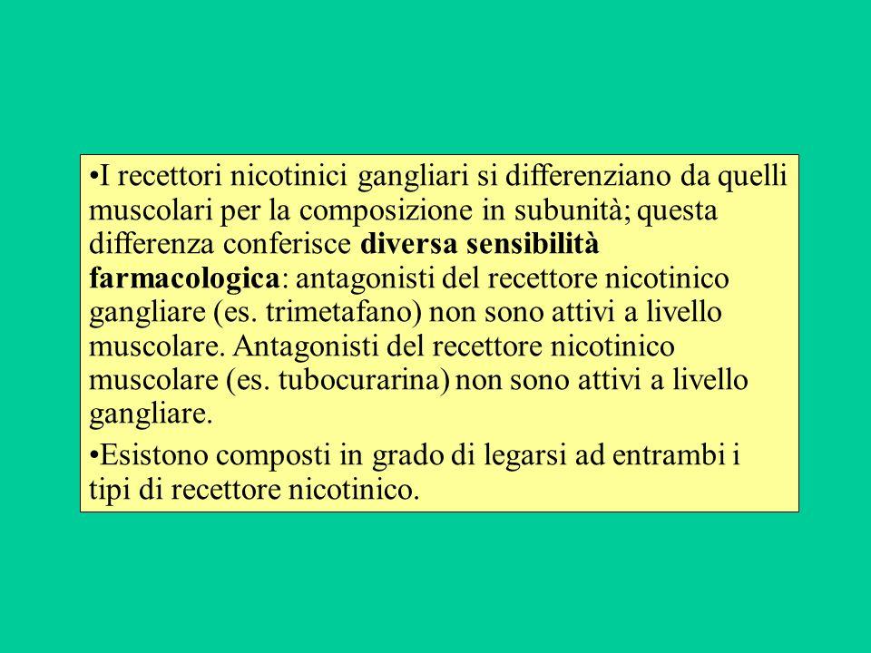 I recettori nicotinici gangliari si differenziano da quelli muscolari per la composizione in subunità; questa differenza conferisce diversa sensibilit