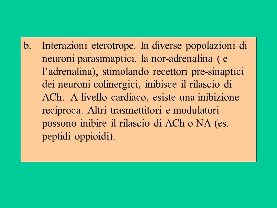 b.Interazioni eterotrope. In diverse popolazioni di neuroni parasimaptici, la nor-adrenalina ( e ladrenalina), stimolando recettori pre-sinaptici dei
