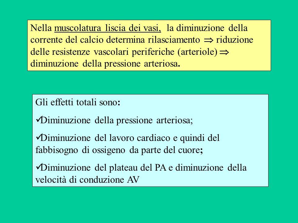 Nella muscolatura liscia dei vasi, la diminuzione della corrente del calcio determina rilasciamento riduzione delle resistenze vascolari periferiche (