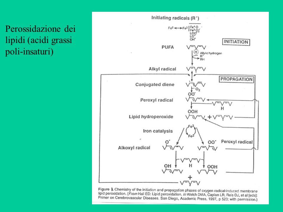 Perossidazione dei lipidi (acidi grassi poli-insaturi)