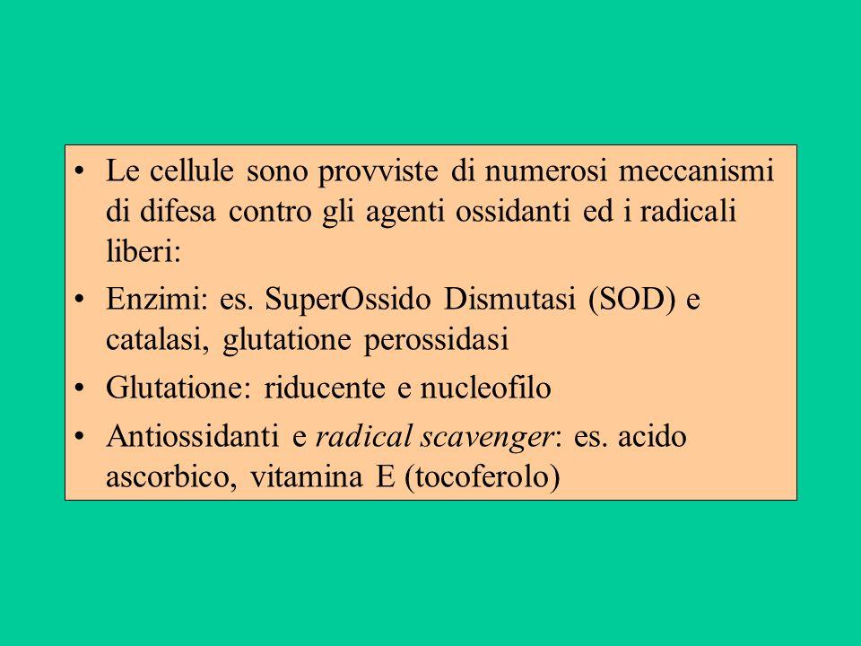 Le cellule sono provviste di numerosi meccanismi di difesa contro gli agenti ossidanti ed i radicali liberi: Enzimi: es. SuperOssido Dismutasi (SOD) e