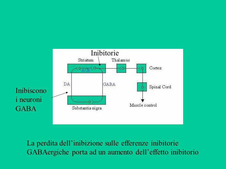 Inibitorie Inibiscono i neuroni GABA La perdita dellinibizione sulle efferenze inibitorie GABAergiche porta ad un aumento delleffetto inibitorio