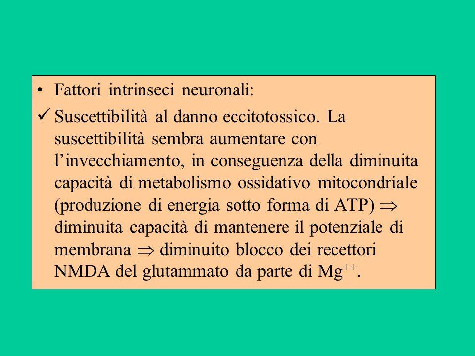 Fattori intrinseci neuronali: Suscettibilità al danno eccitotossico. La suscettibilità sembra aumentare con linvecchiamento, in conseguenza della dimi