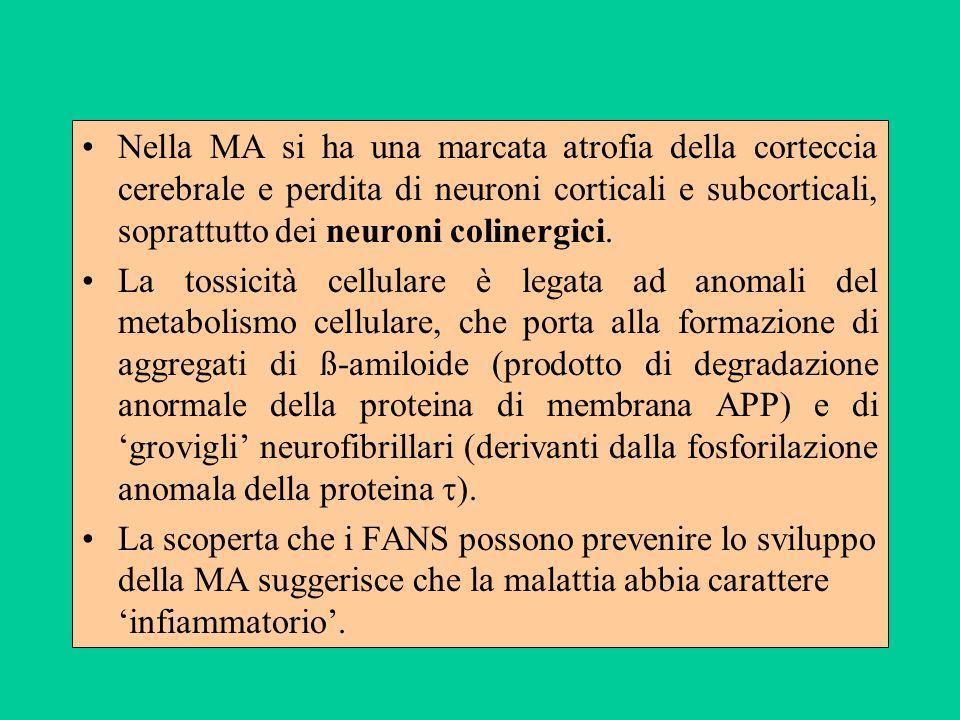 Nella MA si ha una marcata atrofia della corteccia cerebrale e perdita di neuroni corticali e subcorticali, soprattutto dei neuroni colinergici. La to
