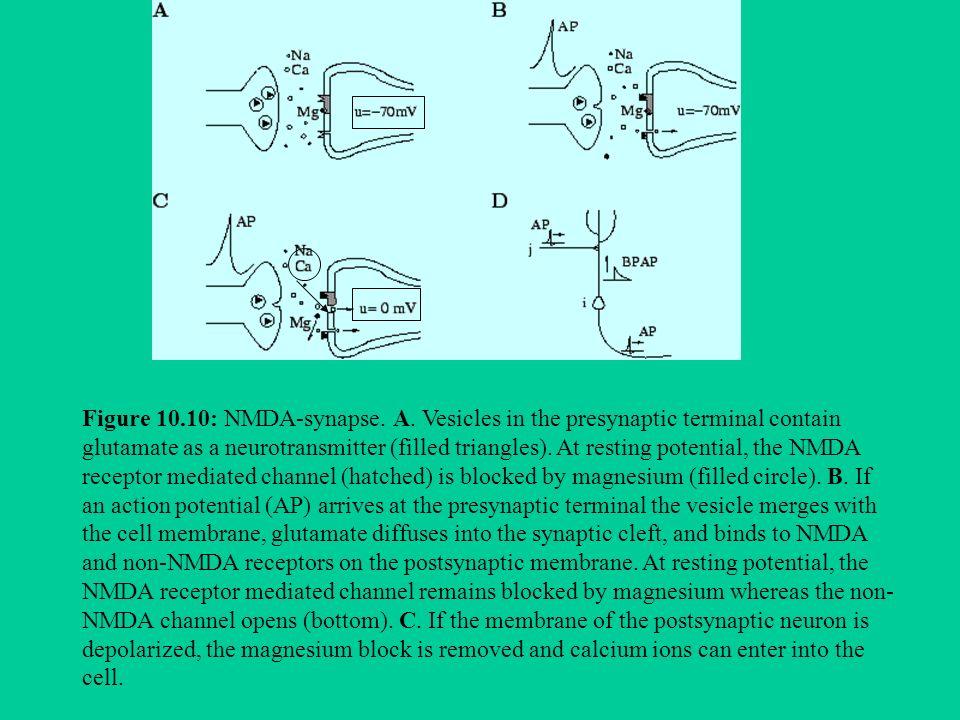 Nei roditori sia gli agonisti NMDA sia gli inibitori del metabolismo ossidativo mitocondriale provocano degenerazioni neuronali simili a quelli della Corea di Huntington Nei malati di Parkinson i difetti del metabolismo energetico sono maggiori di quelli prevedibili in base alletà.
