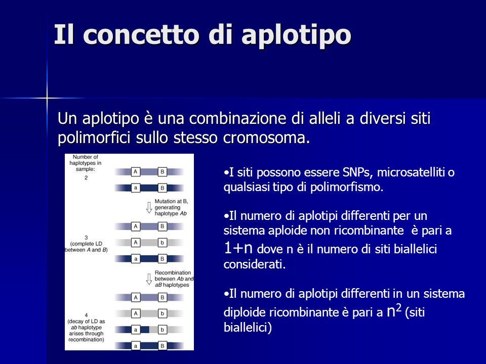 Il concetto di aplotipo Un aplotipo è una combinazione di alleli a diversi siti polimorfici sullo stesso cromosoma. I siti possono essere SNPs, micros