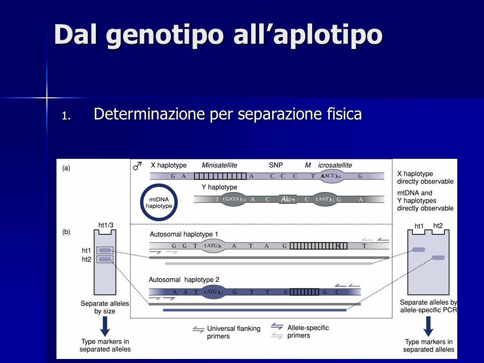 Dal genotipo allaplotipo 1. Determinazione per separazione fisica