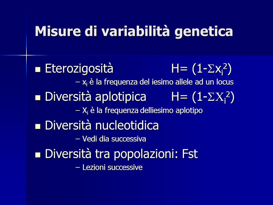 Misure di variabilità genetica Eterozigosità H= (1- x i 2 ) Eterozigosità H= (1- x i 2 ) –x i è la frequenza del iesimo allele ad un locus Diversità aplotipicaH= (1- X i 2 ) Diversità aplotipicaH= (1- X i 2 ) –X i è la frequenza delliesimo aplotipo Diversità nucleotidica Diversità nucleotidica –Vedi dia successiva Diversità tra popolazioni: Fst Diversità tra popolazioni: Fst –Lezioni successive