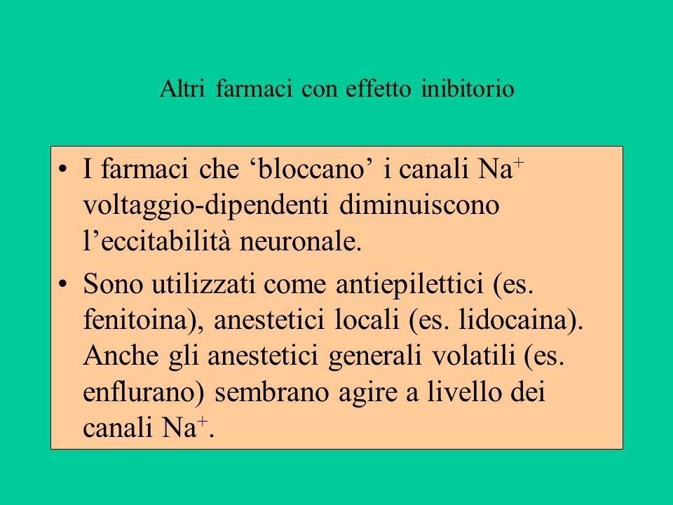 Altri farmaci con effetto inibitorio I farmaci che bloccano i canali Na + voltaggio-dipendenti diminuiscono leccitabilità neuronale.