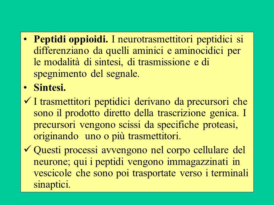 Peptidi oppioidi.