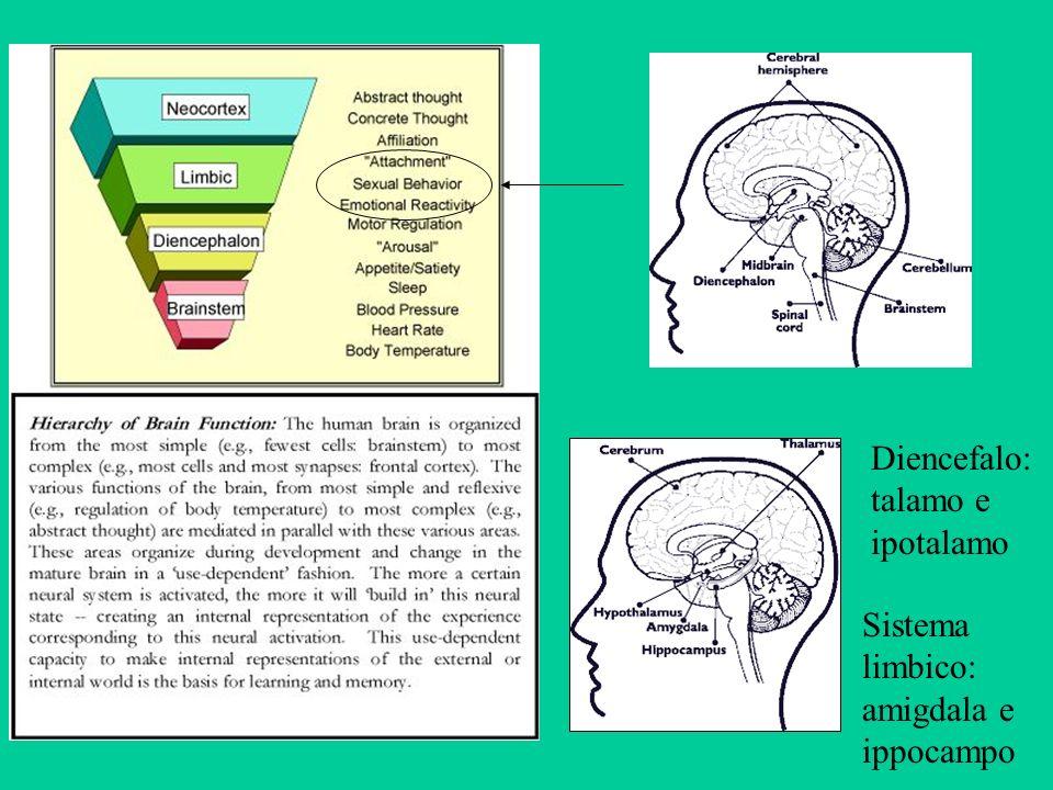 Diencefalo: talamo e ipotalamo Sistema limbico: amigdala e ippocampo