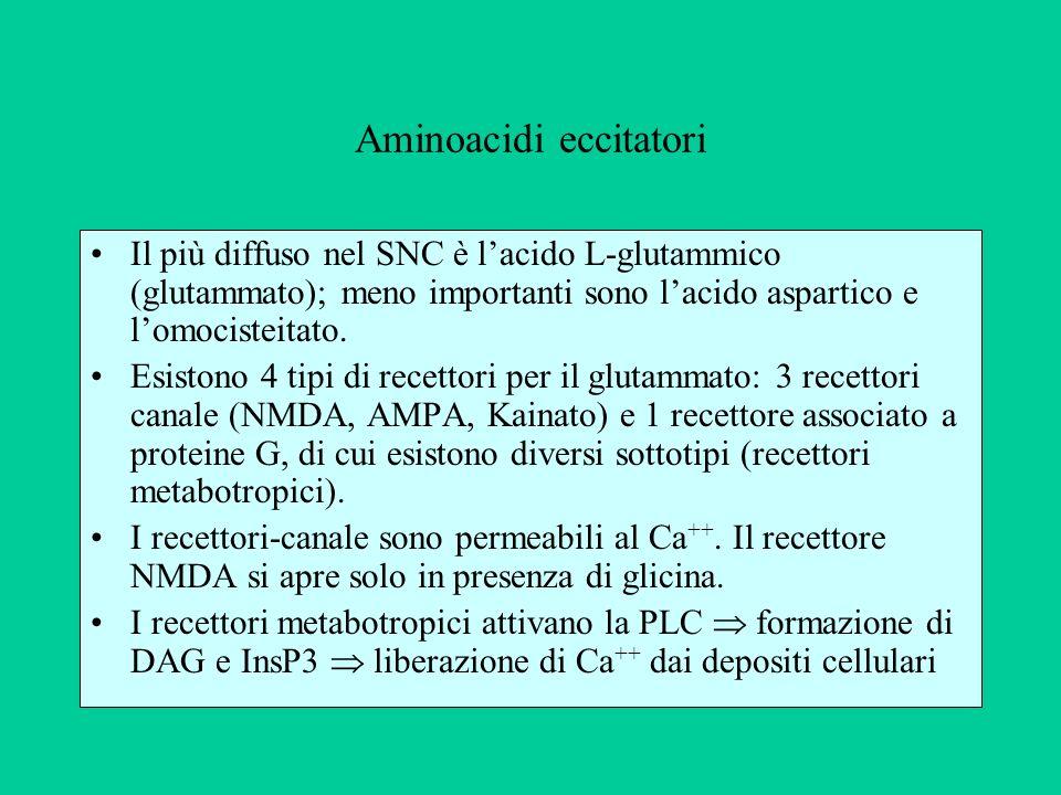 I recettori-canale del glutammato sono i principali mediatori della trasmissione eccitatoria nel SNC.