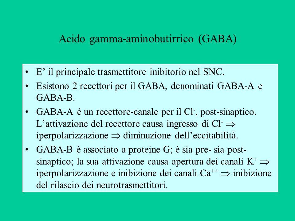 Acido gamma-aminobutirrico (GABA) E il principale trasmettitore inibitorio nel SNC.