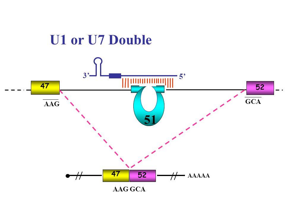 AAG GCA 51 47 52 AAGGCA 47 52 AAAAA U1 or U7 Double 3 5