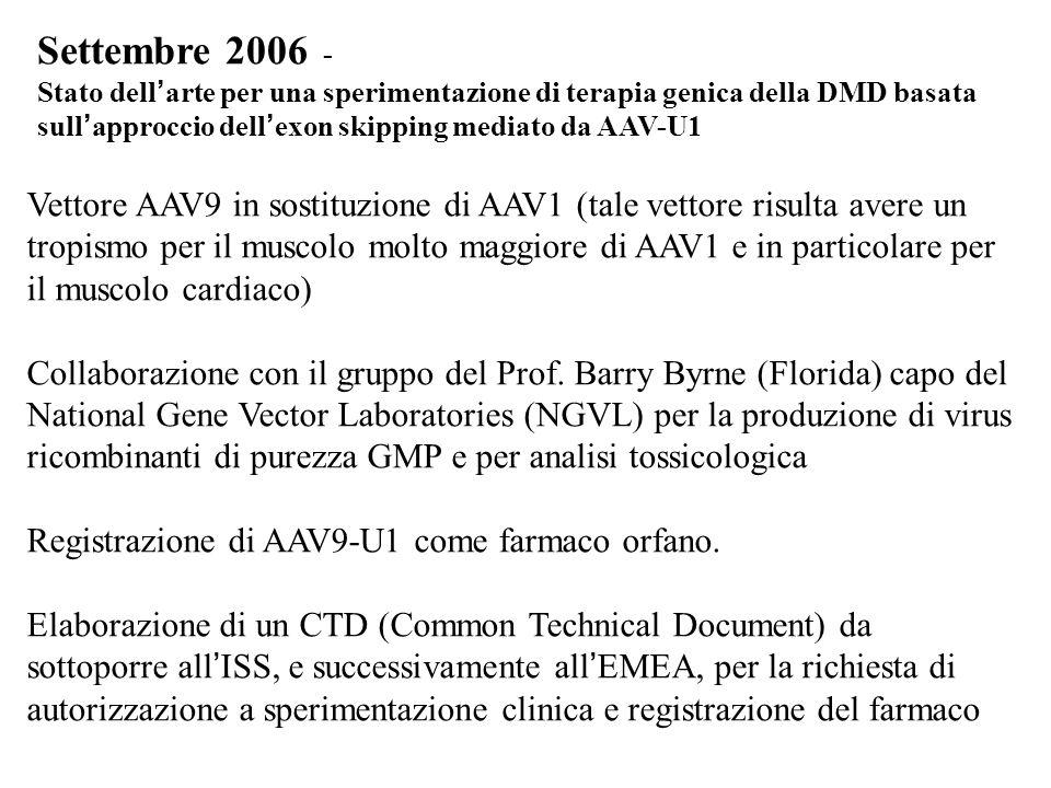 Settembre 2006 - Stato dell arte per una sperimentazione di terapia genica della DMD basata sull approccio dell exon skipping mediato da AAV-U1 Vettor