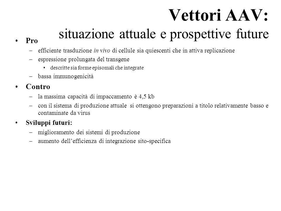 Vettori AAV: situazione attuale e prospettive future Pro –efficiente trasduzione in vivo di cellule sia quiescenti che in attiva replicazione –espress