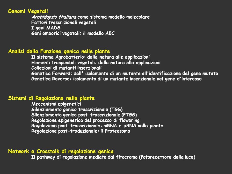 Genomi Vegetali Arabidopsis thaliana come sistema modello molecolare Fattori trascrizionali vegetali I geni MADS Geni omeotici vegetali: il modello AB
