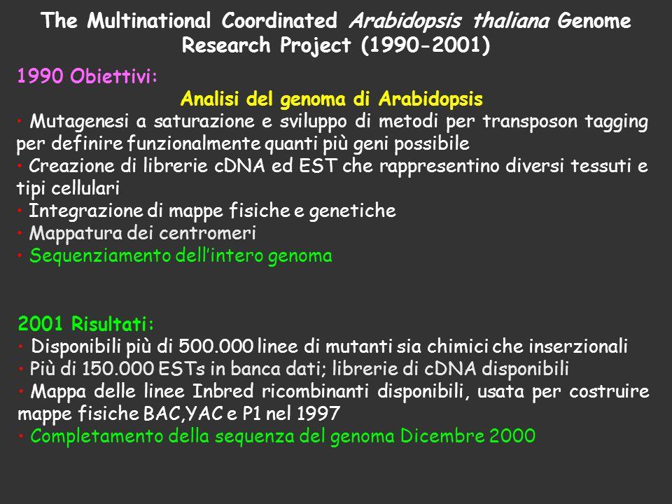 The Multinational Coordinated Arabidopsis thaliana Genome Research Project (1990-2001) 1990 Obiettivi: Analisi del genoma di Arabidopsis Mutagenesi a
