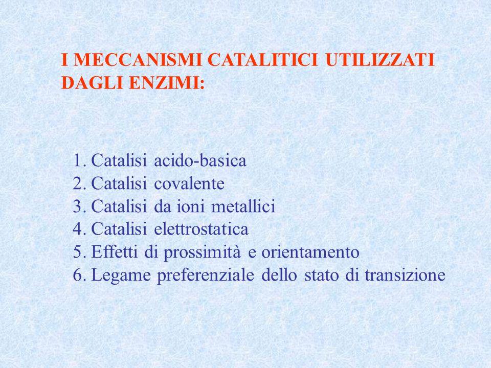 I MECCANISMI CATALITICI UTILIZZATI DAGLI ENZIMI: 1.Catalisi acido-basica 2.Catalisi covalente 3.Catalisi da ioni metallici 4.Catalisi elettrostatica 5