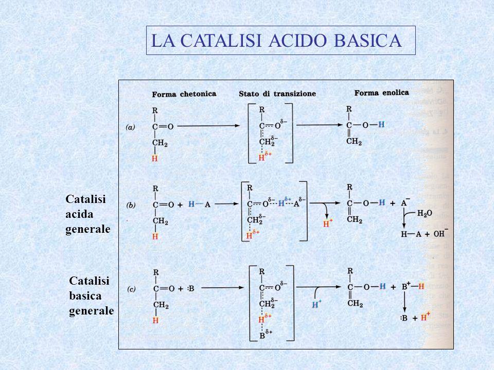 LA CATALISI ACIDO BASICA Catalisi acida generale Catalisi basica generale