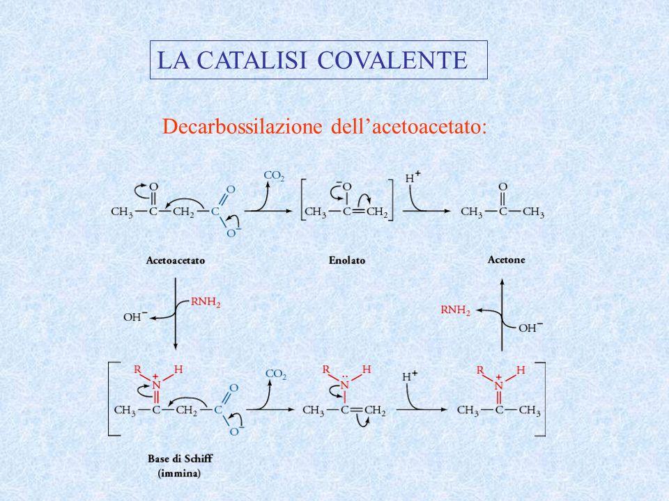 LA CATALISI COVALENTE Decarbossilazione dellacetoacetato: