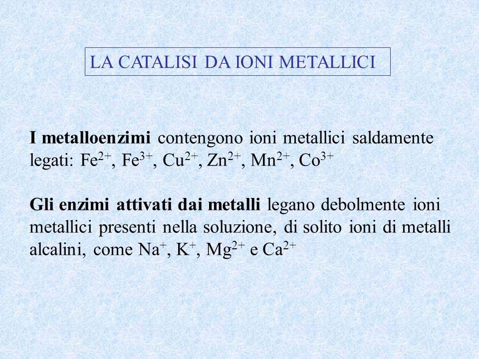 LA CATALISI DA IONI METALLICI I metalloenzimi contengono ioni metallici saldamente legati: Fe 2+, Fe 3+, Cu 2+, Zn 2+, Mn 2+, Co 3+ Gli enzimi attivat