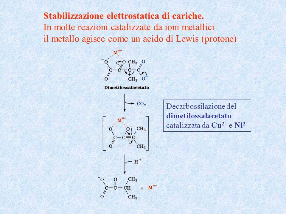 Stabilizzazione elettrostatica di cariche. In molte reazioni catalizzate da ioni metallici il metallo agisce come un acido di Lewis (protone) Decarbos