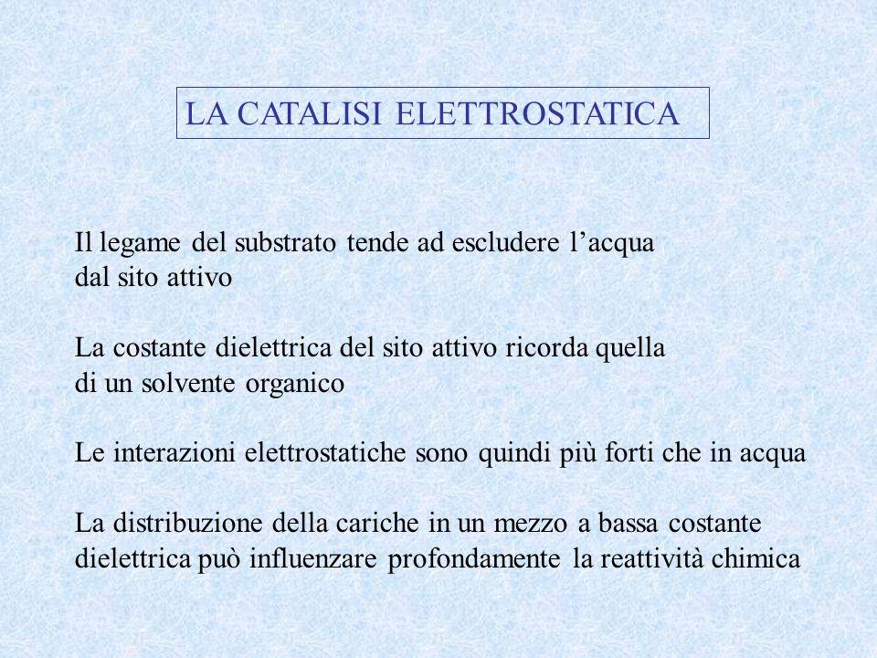LA CATALISI ELETTROSTATICA Il legame del substrato tende ad escludere lacqua dal sito attivo La costante dielettrica del sito attivo ricorda quella di