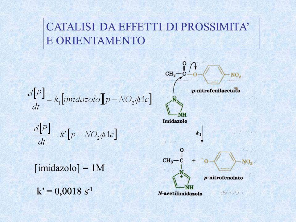 CATALISI DA EFFETTI DI PROSSIMITA E ORIENTAMENTO [imidazolo] = 1M k = 0,0018 s -1