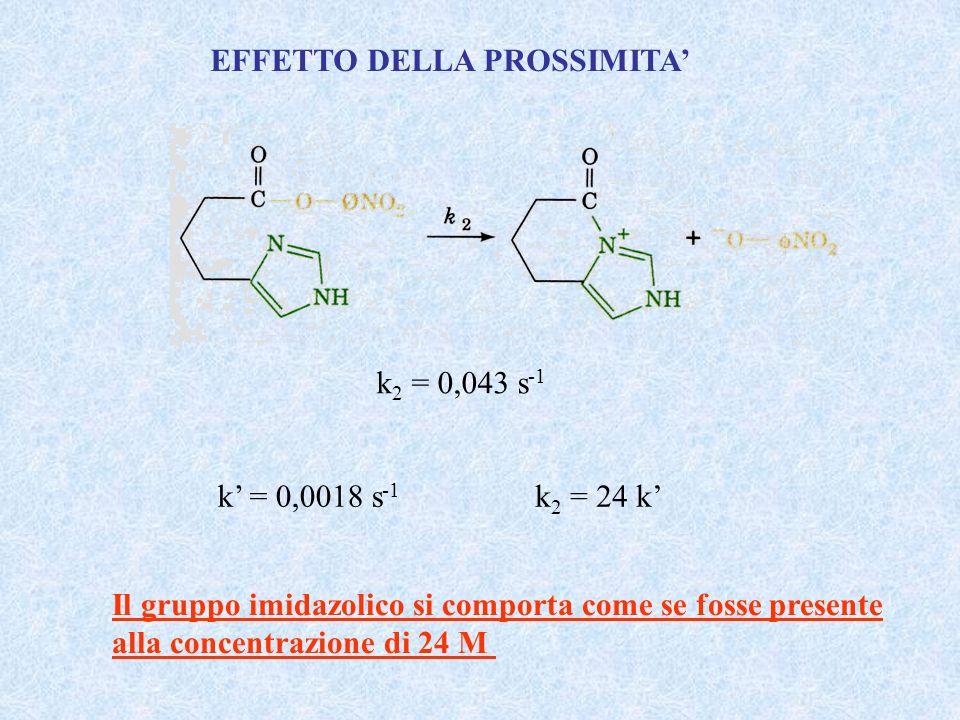 k 2 = 0,043 s -1 k 2 = 24 k Il gruppo imidazolico si comporta come se fosse presente alla concentrazione di 24 M k = 0,0018 s -1 EFFETTO DELLA PROSSIM