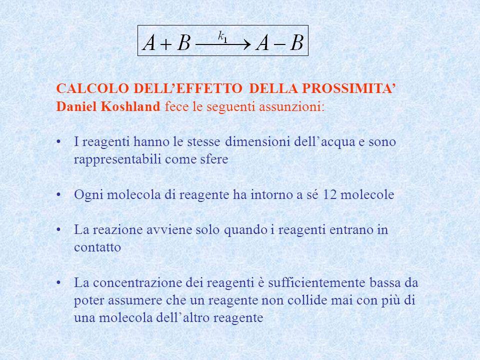 CALCOLO DELLEFFETTO DELLA PROSSIMITA Daniel Koshland fece le seguenti assunzioni: I reagenti hanno le stesse dimensioni dellacqua e sono rappresentabi
