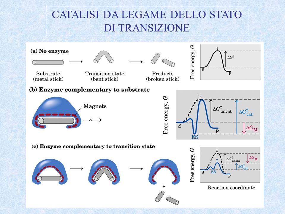 CATALISI DA LEGAME DELLO STATO DI TRANSIZIONE