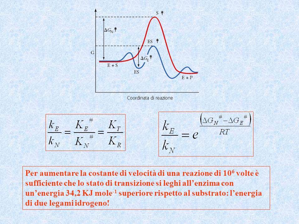 Per aumentare la costante di velocità di una reazione di 10 6 volte è sufficiente che lo stato di transizione si leghi allenzima con unenergia 34,2 KJ