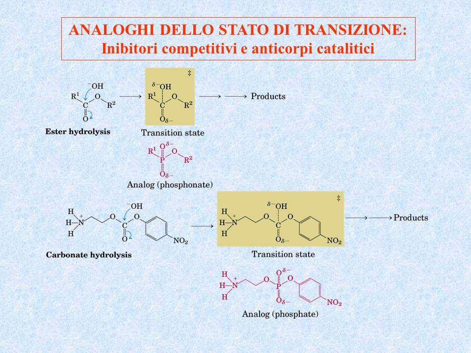 ANALOGHI DELLO STATO DI TRANSIZIONE: Inibitori competitivi e anticorpi catalitici