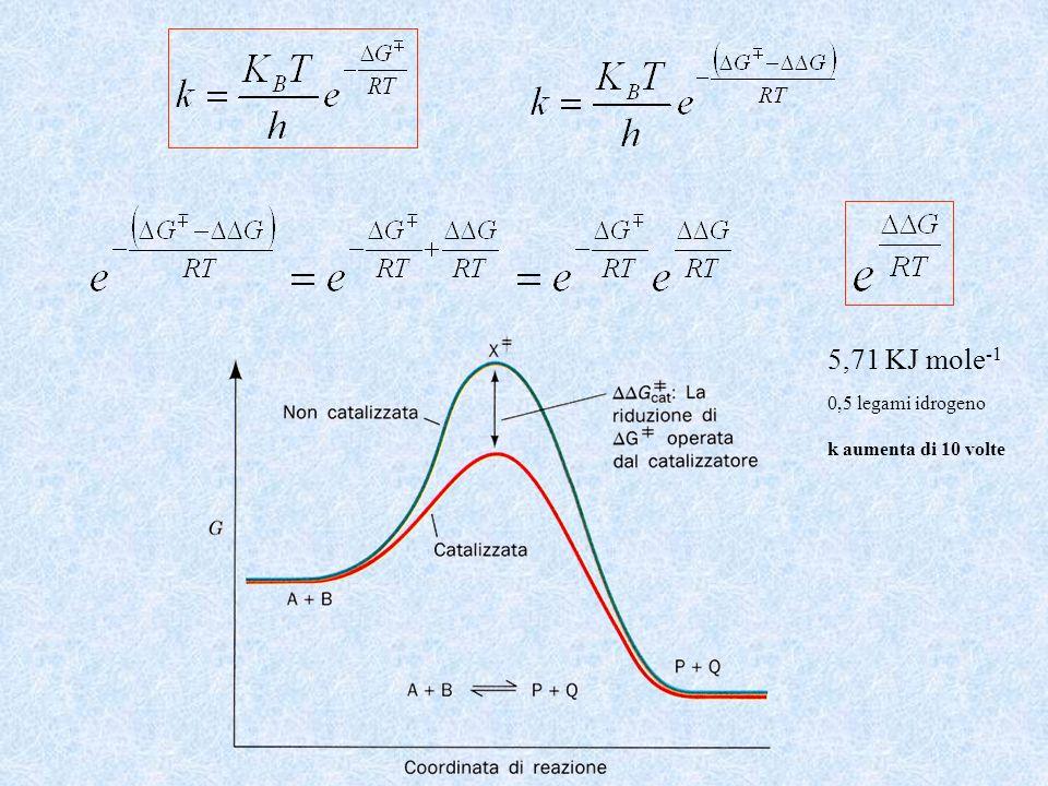 5,71 KJ mole -1 0,5 legami idrogeno k aumenta di 10 volte