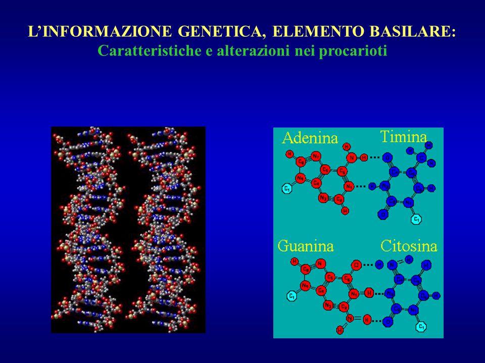 LINFORMAZIONE GENETICA, ELEMENTO BASILARE: Caratteristiche e alterazioni nei procarioti