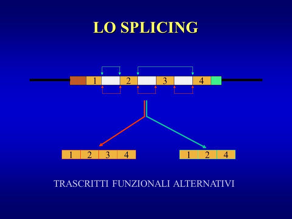 1243 LO SPLICING 1234124 TRASCRITTI FUNZIONALI ALTERNATIVI