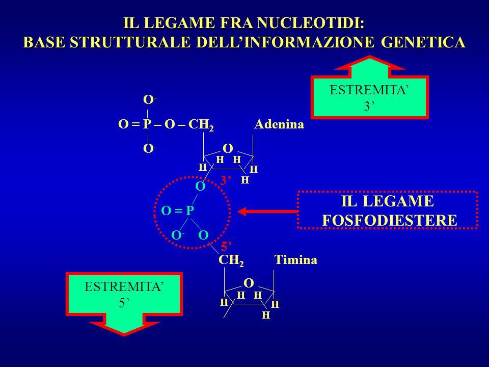 UNITA TRASCRIZIONALE (OPERON) INDUCIBILE oAECDBt -35 -10 +1 NESSUNA TRASCRIZIONE RNA polimerasi R oAECDBt mRNA -35 -10 +1 TRASCRIZIONE RNA polimerasi R I