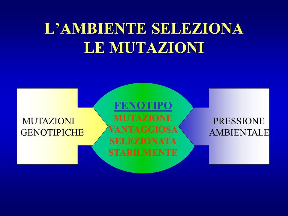 LAMBIENTE SELEZIONA LE MUTAZIONI FENOTIPO MUTAZIONE VANTAGGIOSA SELEZIONATA STABILMENTE MUTAZIONI GENOTIPICHE PRESSIONE AMBIENTALE