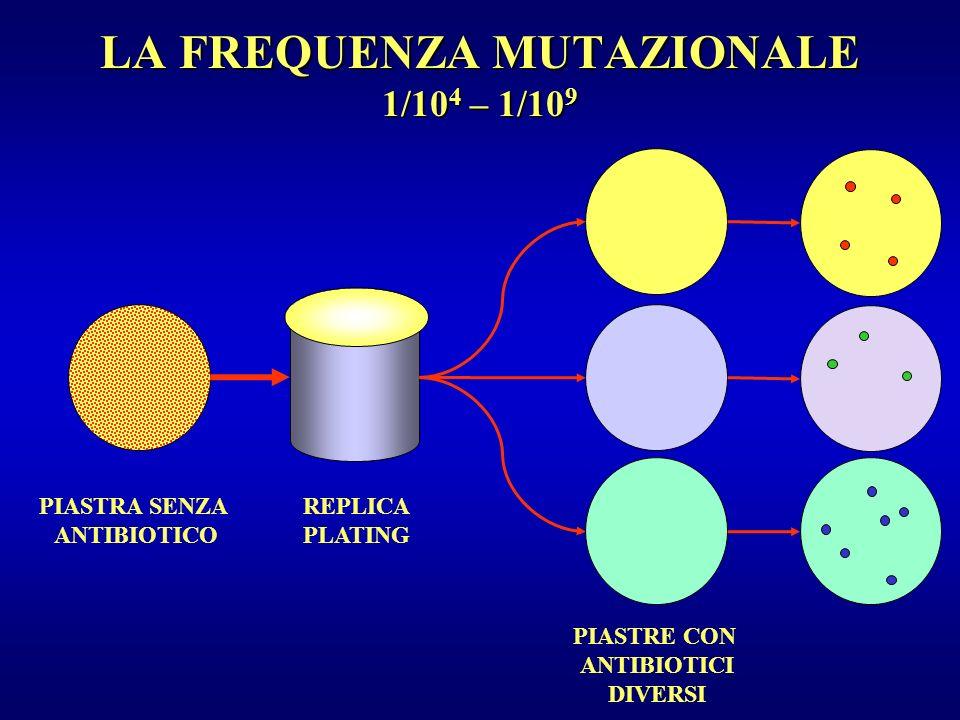 LA FREQUENZA MUTAZIONALE 1/10 4 – 1/10 9 PIASTRA SENZA ANTIBIOTICO REPLICA PLATING PIASTRE CON ANTIBIOTICI DIVERSI
