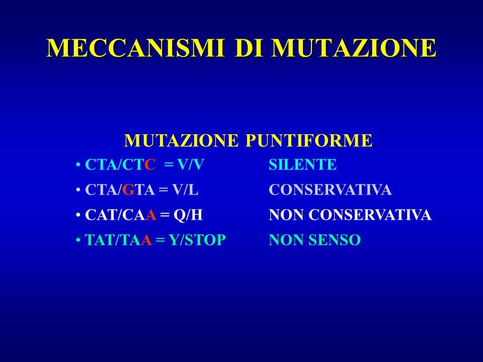MECCANISMI DI MUTAZIONE MUTAZIONE PUNTIFORME CTA/CTC = V/VSILENTE CTA/GTA = V/LCONSERVATIVA CAT/CAA = Q/HNON CONSERVATIVA TAT/TAA = Y/STOPNON SENSO