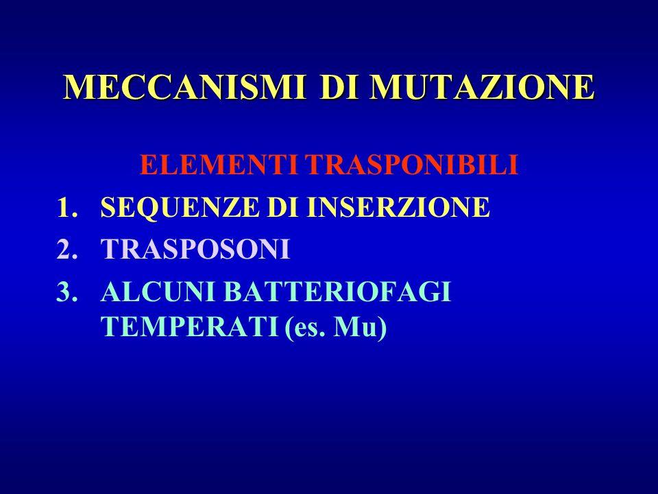 ELEMENTI TRASPONIBILI 1.SEQUENZE DI INSERZIONE 2.TRASPOSONI 3.ALCUNI BATTERIOFAGI TEMPERATI (es. Mu) MECCANISMI DI MUTAZIONE