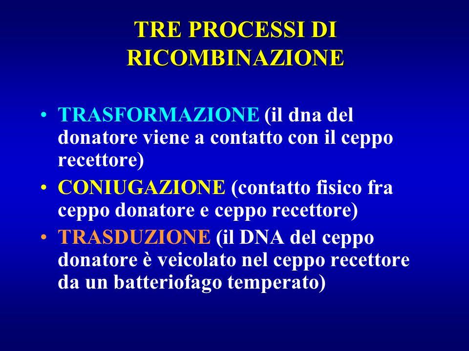 TRASFORMAZIONE (il dna del donatore viene a contatto con il ceppo recettore) CONIUGAZIONE (contatto fisico fra ceppo donatore e ceppo recettore) TRASD
